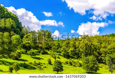 Summer green mountain forest landscape. Mountain forest scene. Summer mountain forest #1637069203