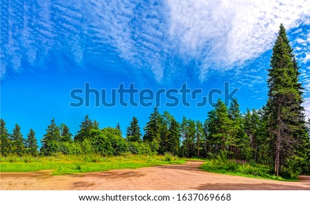 Summer forest road landscape. Forest road in summer. Summer forest trail #1637069668