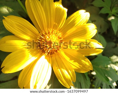 golden yellow flower invite me to take a pic