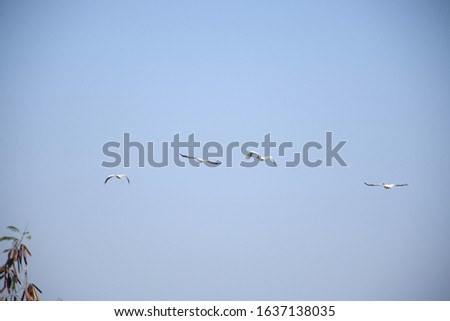 Birds flying in the sky, Blue sky, flying birds in line  #1637138035