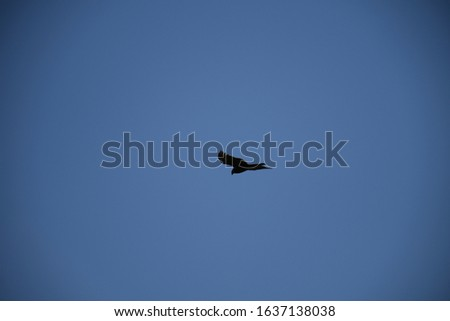 Birds flying in the sky, Blue sky, flying birds in line  #1637138038