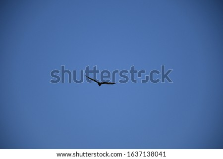 Birds flying in the sky, Blue sky, flying birds in line  #1637138041