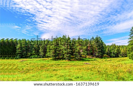 Summer green forest meadow landscape. Forest meadow in summer. Forest green meadow landscape. Forest meadow view #1637139619