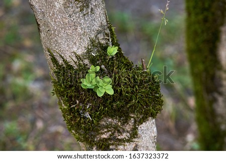 A lonely mossy tree trunk.Tree trunk with moss. #1637323372