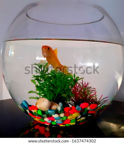 Goldfished inside a fish bowl  #1637474302