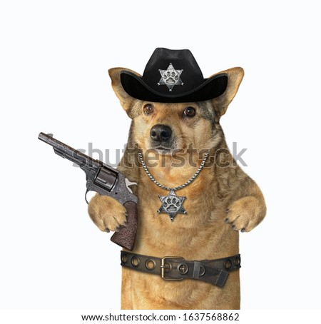 The beige dog policeman is wearing in a black cowboy hat, a police badge around his neck and a stainless steel belt. He holds a revolver. White background. Isolated.