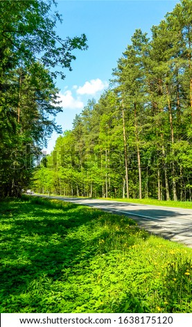Summer green forest road view. Forest road. Road in forest. Summer forest road #1638175120