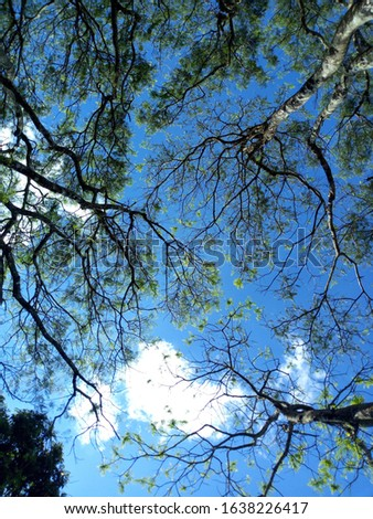 one day am laying in a forest and looking at the sky. I felt like is this sky or heaven. Wow man. A true natural pic i have ever taken. Gratitude.