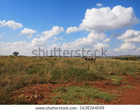 African wildlife and nature pictures #1638264049
