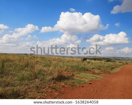 African wildlife and nature pictures #1638264058