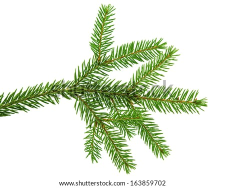 fir branch isolated on white background #163859702