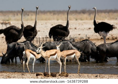 African animals in the wild around a water #1638739288