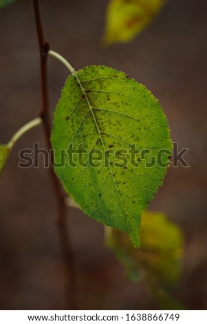 Beautiful green autumn leaf on a branch, macro photo. #1638866749
