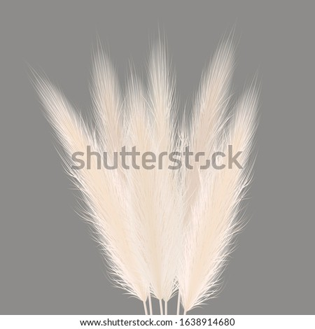 Pampas golden grass sheaf on grey. Vector illustration. panicle Cortaderia selloana bouquet South America. ornamental grass. feathery grass head plumes, for floral arrangements, displays, decoration #1638914680