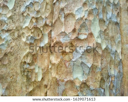 Bark is the outermost layers of stems and roots of woody plants. Plants with bark include trees, woody vines, and shrubs. Bark refers to all the tissues outside the vascular cambium. #1639071613