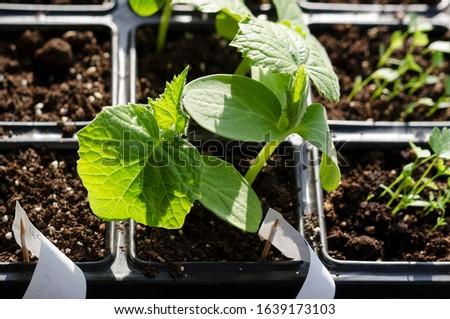 Growing bio vegetables in the shadows in northern Bulgaria #1639173103