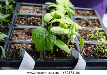 Growing bio vegetables in the shadows in northern Bulgaria #1639173106