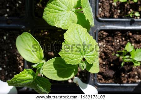Growing bio vegetables in the shadows in northern Bulgaria #1639173109