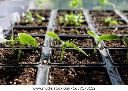 Growing bio vegetables in the shadows in northern Bulgaria #1639173112