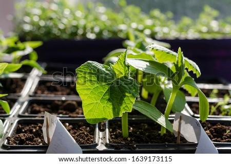 Growing bio vegetables in the shadows in northern Bulgaria #1639173115