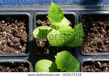 Growing bio vegetables in the shadows in northern Bulgaria #1639173118