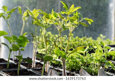 Growing bio vegetables in the shadows in northern Bulgaria #1639173763