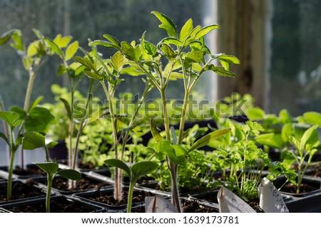 Growing bio vegetables in the shadows in northern Bulgaria #1639173781