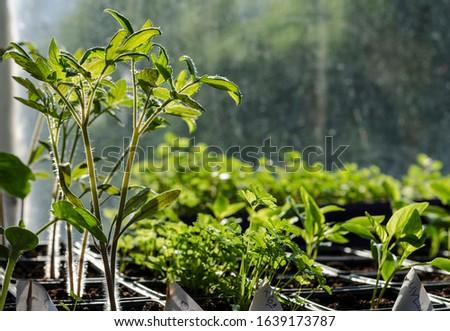 Growing bio vegetables in the shadows in northern Bulgaria #1639173787