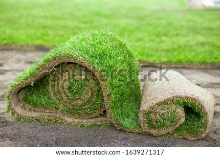 creating a new lawn with rolled grass, lawn with rolled grass #1639271317