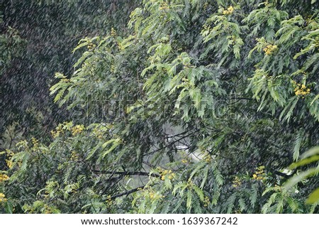 tree leaves being swayed by windy rainfall  #1639367242