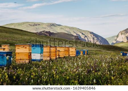 Bee hives in mountains near Khinalug village. Guba district, Azerbaijan