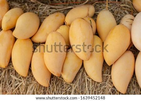 Yellow ripe ripe mango in a basket #1639452148