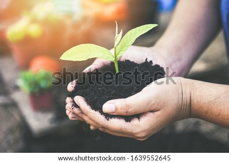 planting a tree seedlings young plant are growing on soil holding by hand woman help the environment / Save environment green world ecology concept #1639552645