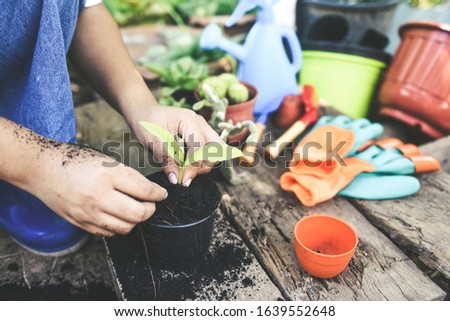 Gardening planting a tree seedlings young plant are growing in pot soil with hand woman help the environment / Save environment green world ecology concept #1639552648