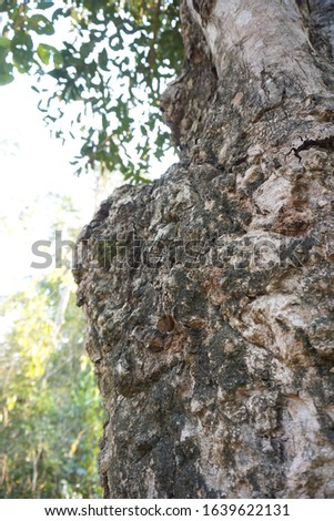 Bark is the outermost layers of stems and roots of woody plants. Plants with bark include trees, woody vines, and shrubs. Bark refers to all the tissues outside the vascular cambium and  #1639622131