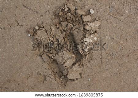 Soil texture background. Top view soil . Dug soil. #1639805875