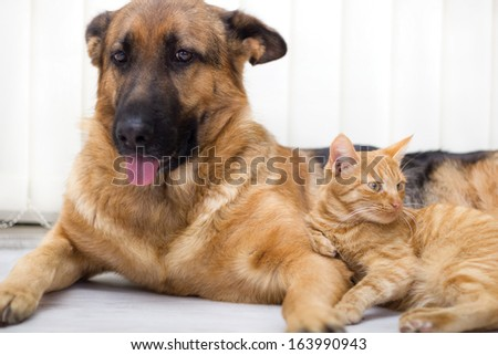 cat and dog together lying on the floor  #163990943