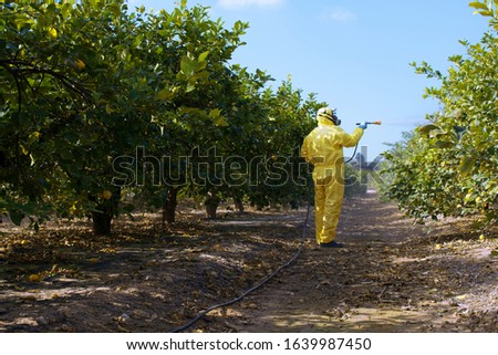 Weed insecticide fumigation. Organic ecological agriculture. Spray pesticides, pesticide on fruit lemon in growing agricultural plantation, spain. Man spraying or fumigating pesti, pest control #1639987450