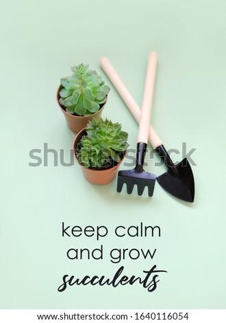 keep calm and grow succulents. plant in home garden concept. spring season. minimal composition.
