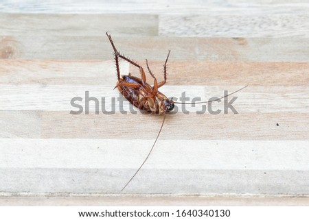 one creepy cockroach dead on floor with insecticide killing #1640340130
