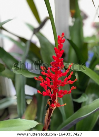 Exotic bright red botany floral #1640359429