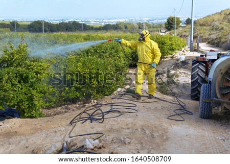 Weed insecticide fumigation. Organic ecological agriculture. Spray pesticides, pesticide on fruit lemon in growing agricultural plantation, spain. Man spraying or fumigating pesti, pest control. #1640508709