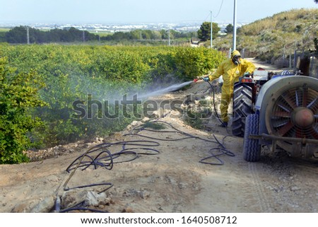 Weed insecticide fumigation. Organic ecological agriculture. Spray pesticides, pesticide on fruit lemon in growing agricultural plantation, spain. Man spraying or fumigating pesti, pest control. #1640508712