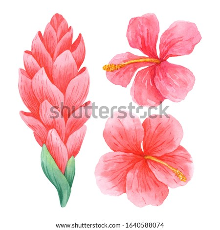 Watercolor flowers of ginger and hibiscus isolated on white background. Hand-drawn tropical flowers clip art perfect for cosmetics design, card making, wedding decor and other designs.