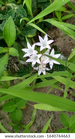 beautiful wild white flowers, very rare in Ceará #1640764663
