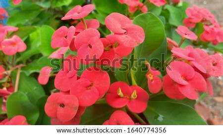 are beautiful red flowers, christmas garden #1640774356