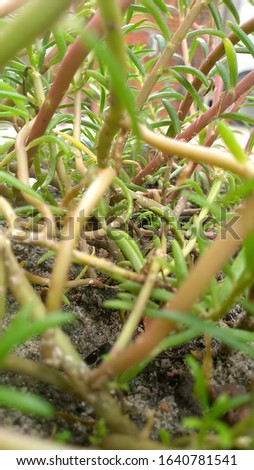 several stems of exotic plants intertwined #1640781541