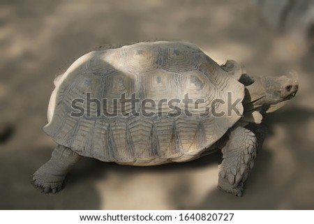 Nature is loved by every person.This picture defines the nature and wild life animal.Tortoise,a animal of nature.You can use this natural pic for biography, background and many more.