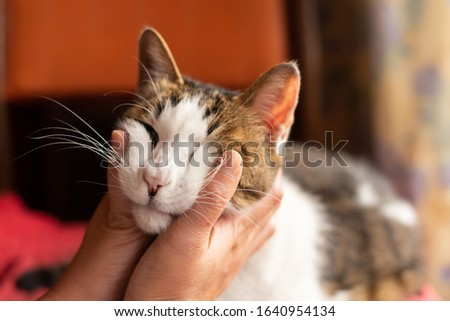 touch and stroke a cat sit on the chair at home #1640954134
