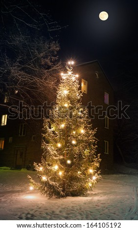 A winter picture with  a Christmas tree in Stockholm